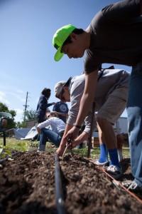 planting on the farm